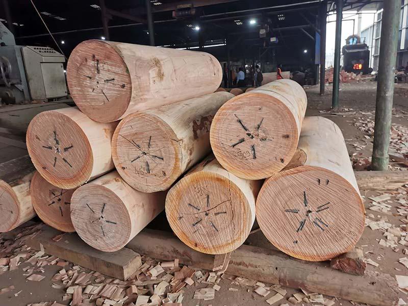 Okume face veneer factory established in Gabon